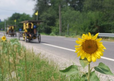 Romania and sunflowers